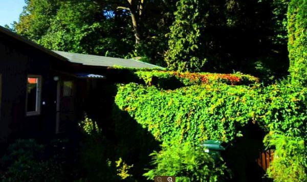 Trädgårdskonsert